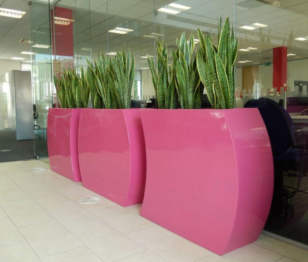 گیاهان در فضای کاری